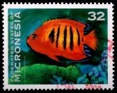 FEDERATED STATES OF MICRONESIA - CIRCA 1996: A 32-cent stamp printed in the Federated States of Micronesia shows the flame angel fish, Centropyge loricula, and coral.