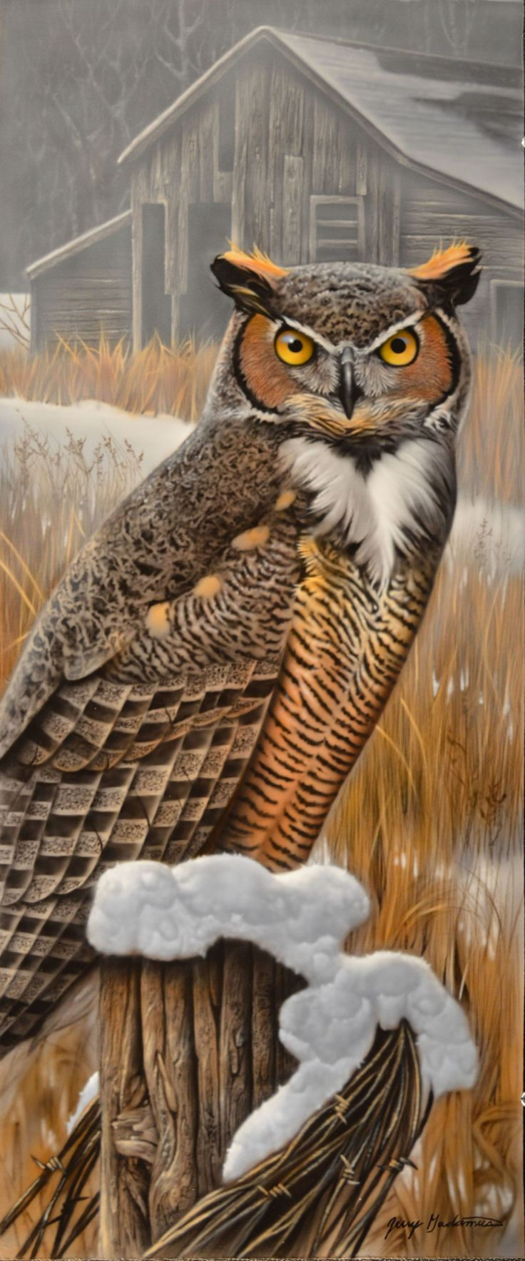 best 25 owl pictures ideas on pinterest beautiful owl owls and