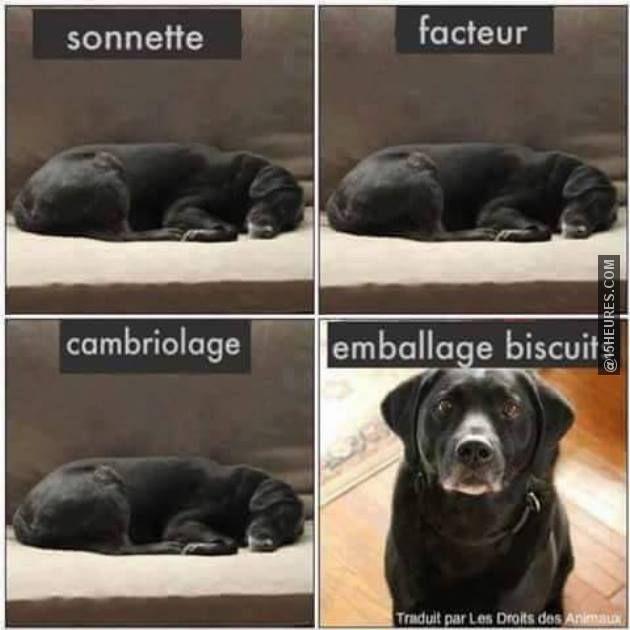 Réactions d'un chien