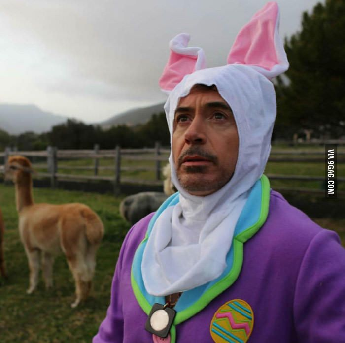 "You might be cool, but you will never be ""Robert Downey Jr dressed as bunny chilling with Llamas cool"" - 9GAG"