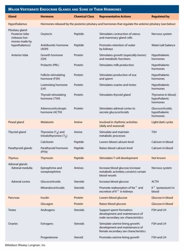 endocrine system hormones chart - Google Search