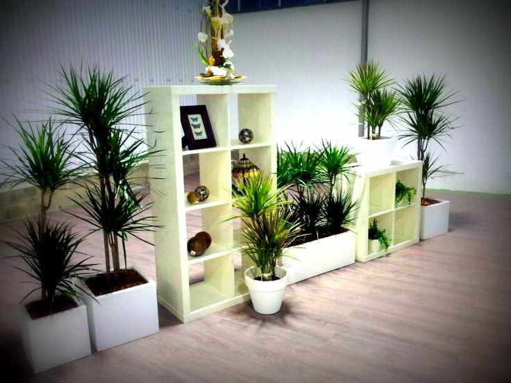 Dracena marginata planta de interior que no requiere mucha for Plantas verdes de interior