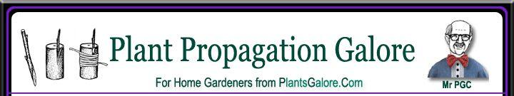 Propagation: Tissue Culture - Ornamental Plant Care Information from PlantsGalore.Com