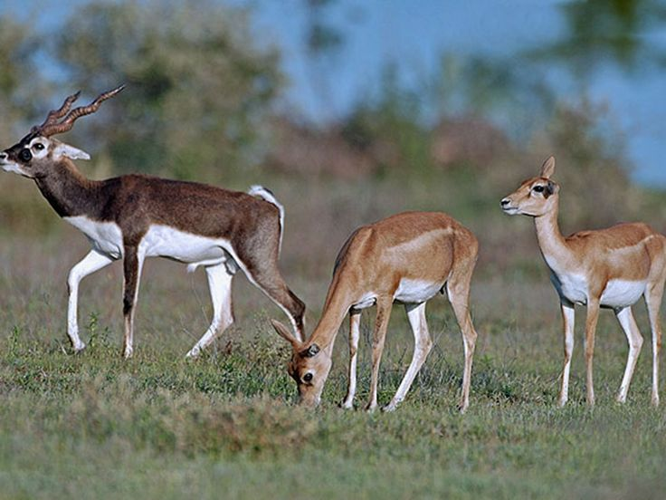 Nahar Wildlife Sanctuary - in Haryana, India