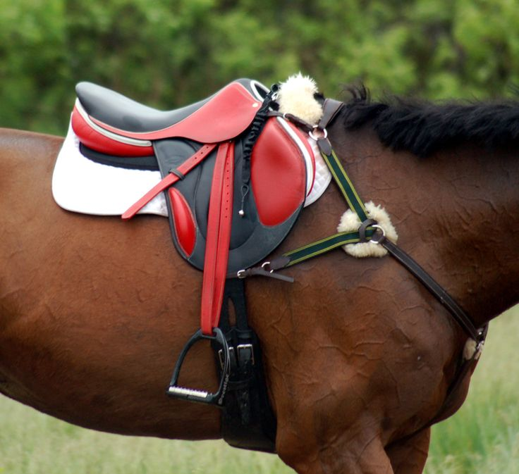 red and black saddle