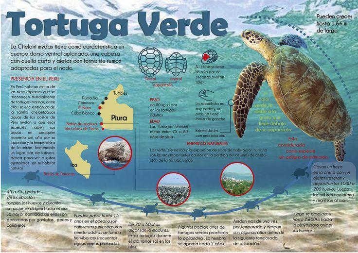 Infografia de Tortuga Marina