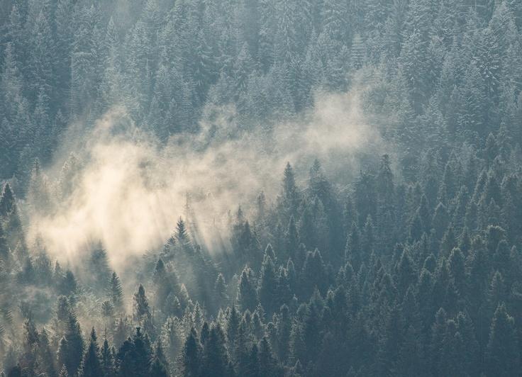 Андрей Радюк - ...Forest...