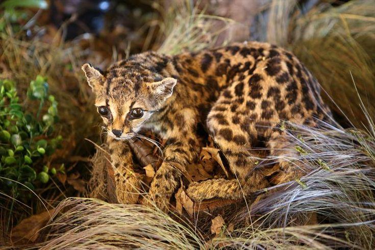 Arquivo - Jardim Botânico tem exposição de animais taxidermizados do acervo do Museu de História Natural - Álbum - Prefeitura de Curitiba