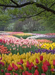 Longwood Gardens, PA. I visited this lovely garden with my boys last year, and I will never forget it. Truly Amazing!