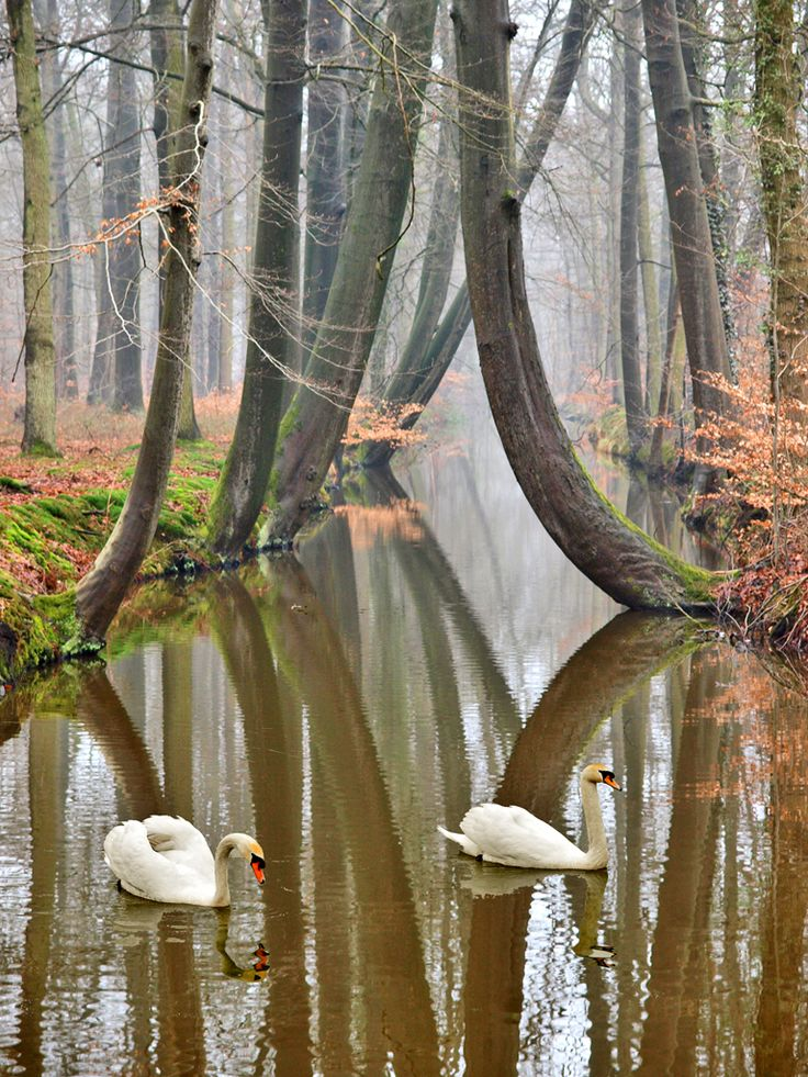 Nature in Twente