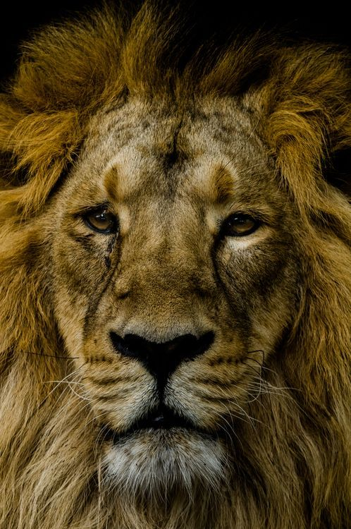 Cecil not forgotten Photo by Gareth Williams - 2016 National Geographic Nature Photographer of the Year