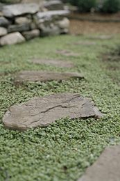 Plant Thyme in areas where grass won't grow.  Like this for front walk, smells so good!