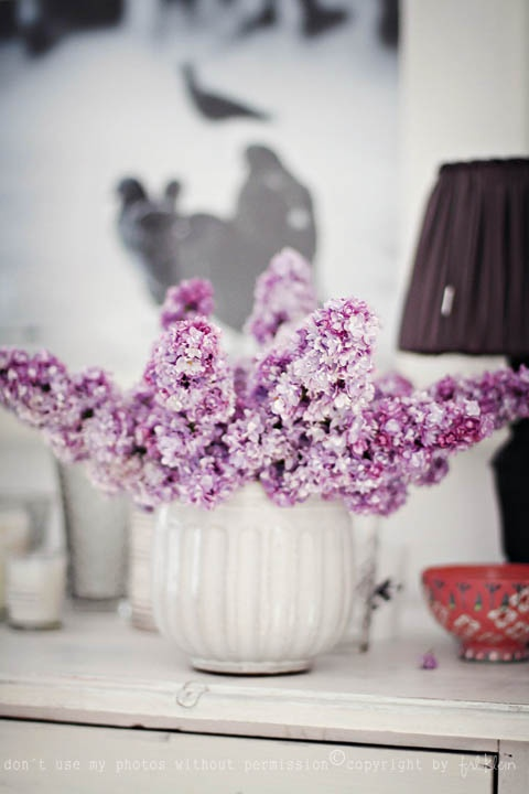 lilacsFresh Flower