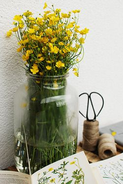 yellow joy: Yellow Flowers, Corner, Flowers Greens, Yellow Orange Flowers, Vase Flowers Greenery, Charming Wildflowers, Flower, Buttercup