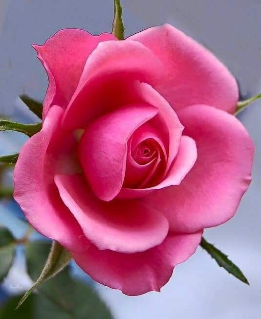 269 best Rosen images on Pinterest Gif pictures, Animated gif and