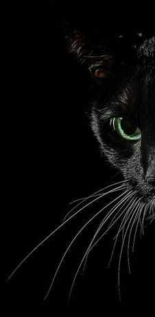 Beautiful Black Cat!
