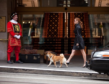 Really Pet Friendly Hotel In San Francisco Hotelsunion Squarehotels