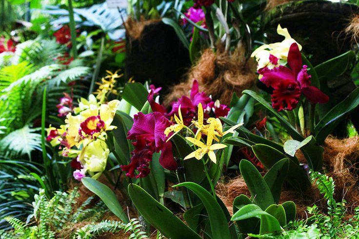 Singapore, beautiful, National, Botanic Gardens, orchids, flowers