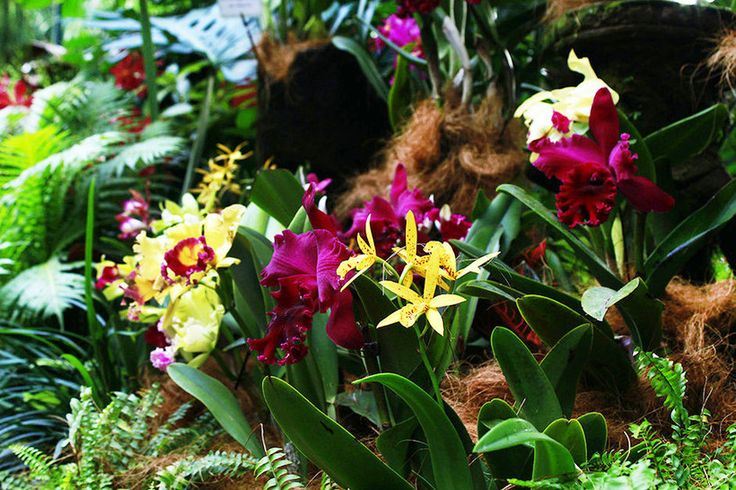 Singapore, beautiful, National, Botanic Gardens, orchids, flowers