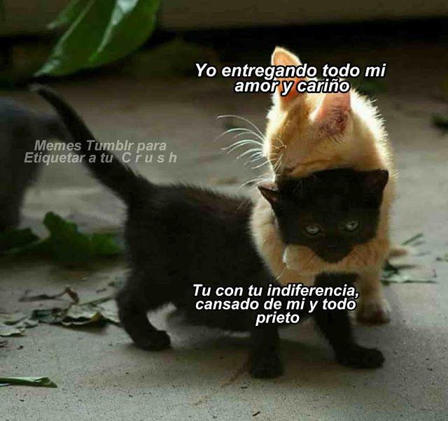Los Mejores Memes De Gatos Para Dedicar Frase Chida Cute Memes Animals Cats