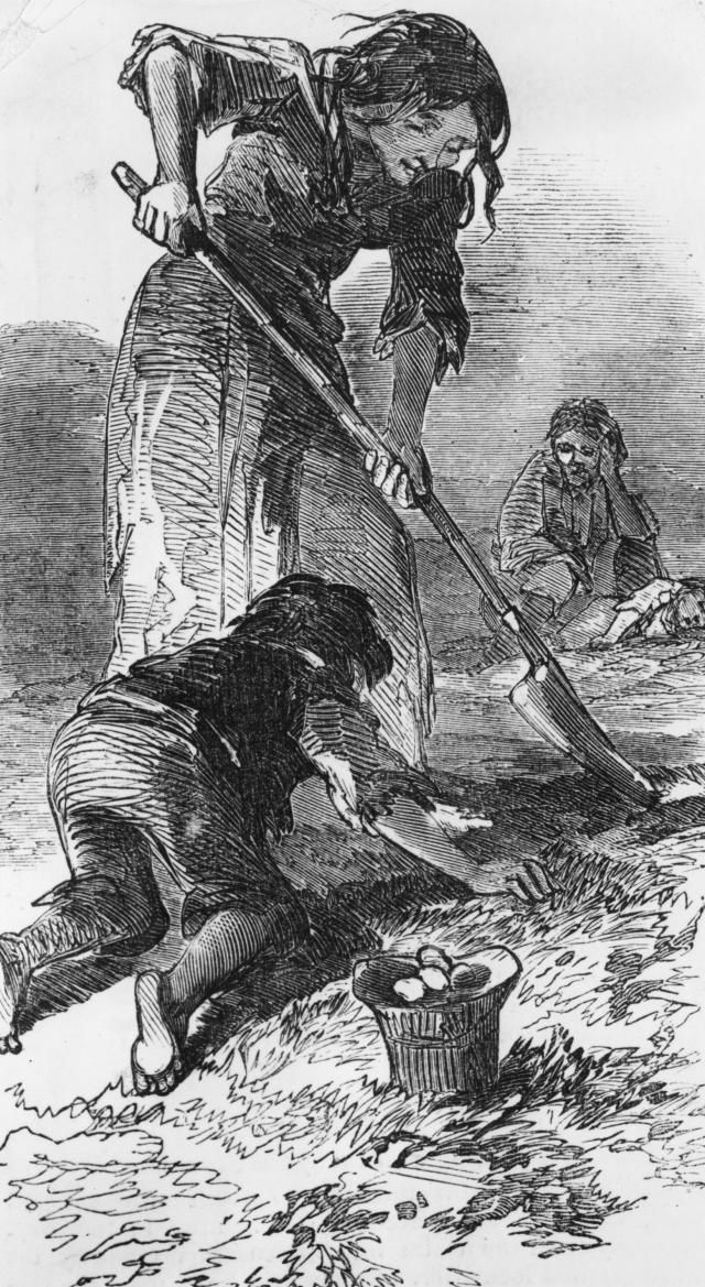 What Happened During the Great Irish Famine?: A starving family digging for potatoes, as depicted in the Illustrated London News in 1847