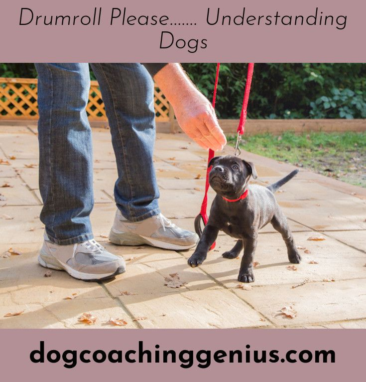 Check Out The Webpage To Read More On Stop Dog From Pooping In