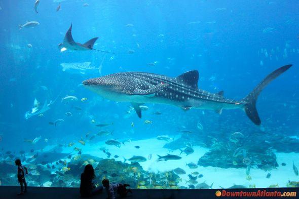 georgia aquarium - Google Search