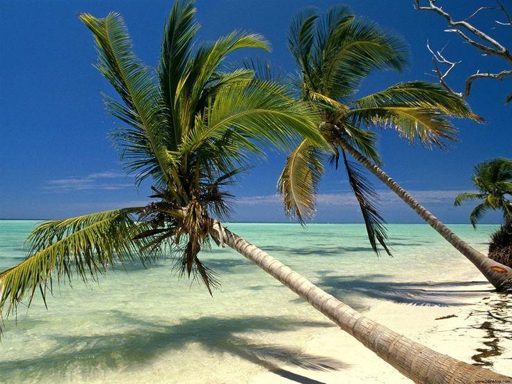 Plage de Punta Cana #croisière #croisierenet.com #paysage #caraïbes #voyage #croisièrecaraïbes