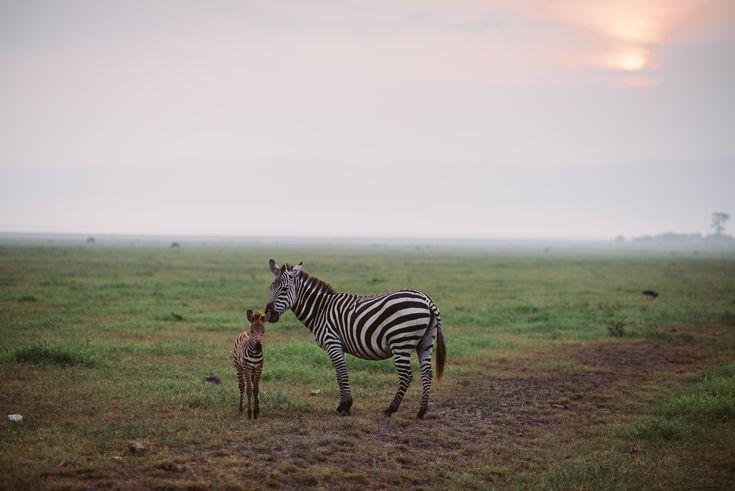 Tanzania, Ngorogorocrater