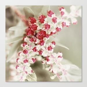 Red Flower Stretched Canvas by Belle13: Stretched Canvas, Belle Flore, Stretch Canvas, Red Flowers, Flowers Stretch, Photo