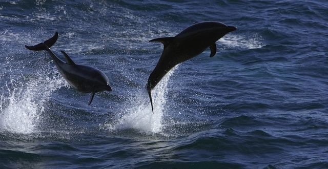 Protect Dolphins from the Lasting Effects of the 2010 Gulf of Mexico Oil Spill