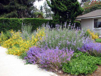 CA own native landscape design Penstemons and sage