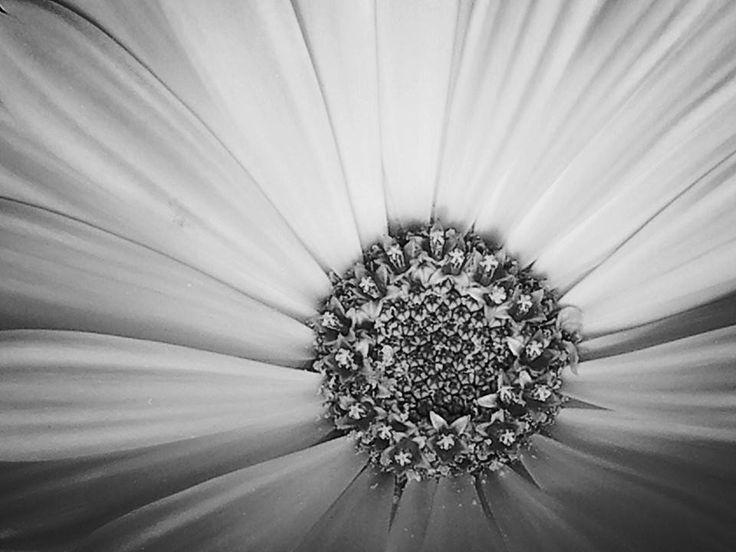 ---O- - fiore