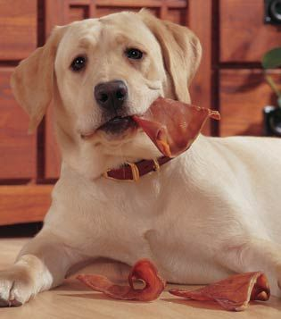 Premium Pig Ears for Dogs - buying your dog's treats from Drs. Foster and Smith helps fund advancements in pet cancer therapies.