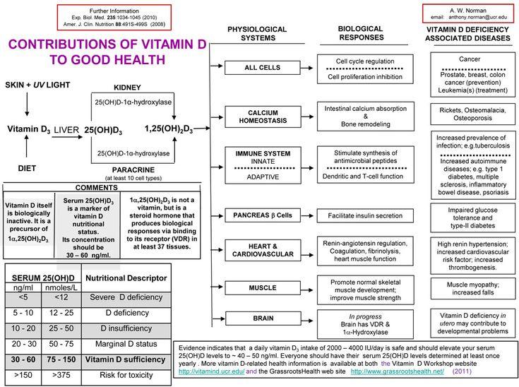 Magnesium Rich Foods List Printable Disease And Vitamin