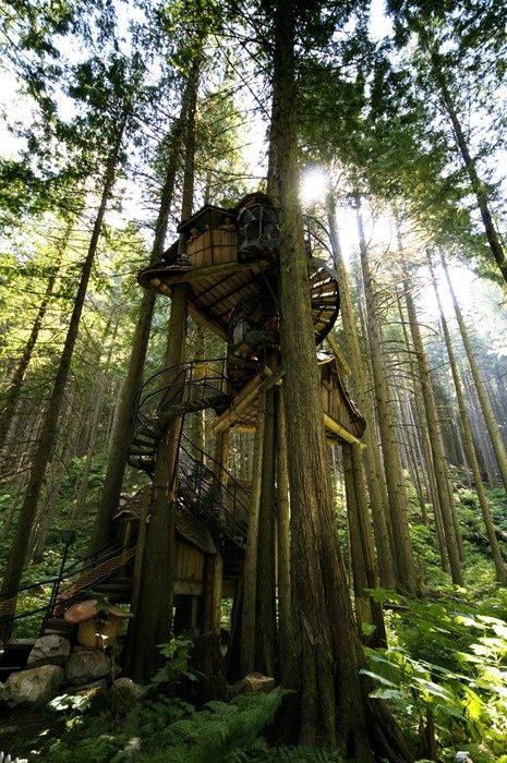 Tree house in the woods and look at the cool mushroom bird house! so cool!