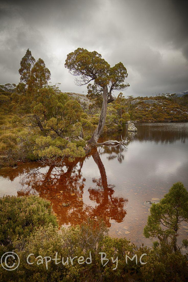 Lone Pencil Pine, wombat pools, Cradle Mountain National Park