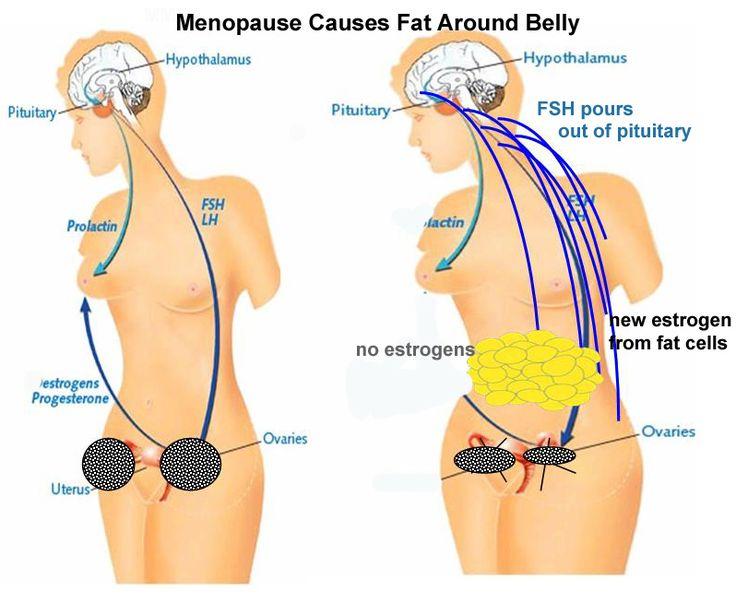 Menopausal Problems, Menopause, Menopause Symptoms, Menopause Treatment, Menopause Causes, Menopause Age, Early Menopause