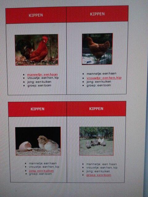Kwartet dieren en hun jong. Te downloaden van digischool.