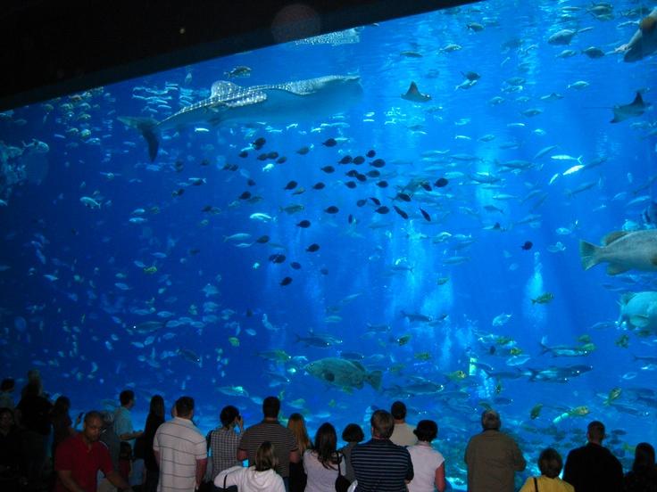 Okinawa Island. Жизнь подводных обитателей аквариума на острове Окинава. Япония. Путешествуй с нами. JamAero.com