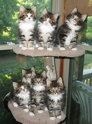bunch of pretty kitties.....