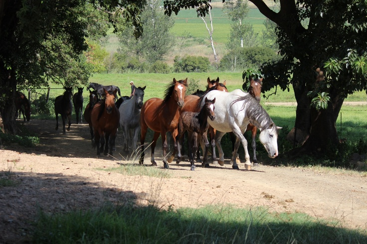 Horses at Verlorenkloof, Mpumalanga,South Africa