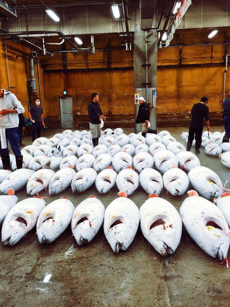 築地  マグロ  Tuna  #sakamainc
