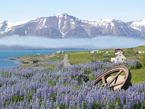 Hrísey, Iceland  June 2007