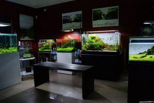 Aquarium shop: showroom atAquaeden ShopStunning aquarium shop in Portugal. More information on their facebook page here.