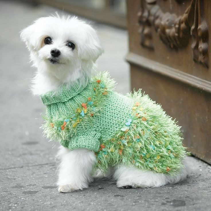 Dog Turtleneck Knitting Pattern : 17 Best ideas about Dog Sweater Pattern 2017 on Pinterest ...