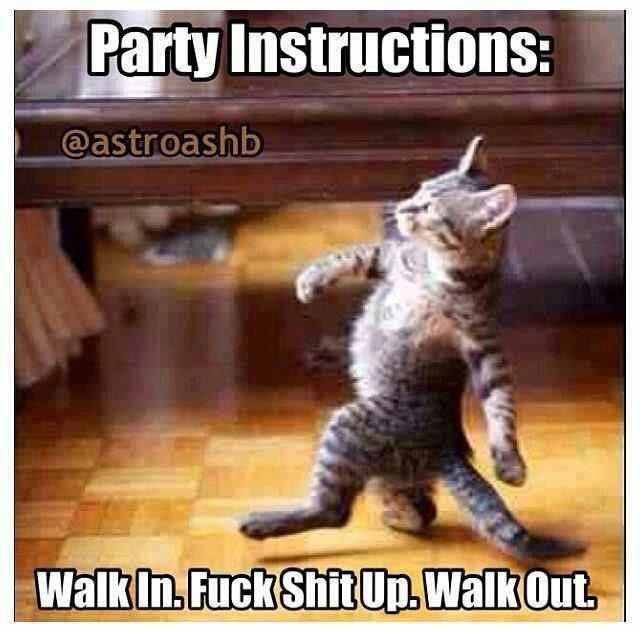 Image result for lolcat party