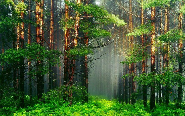 Пазл Заколдованный лес — собрать пазл онлайн