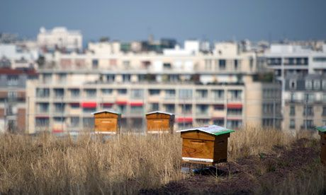 Urban meadow ... beehives on the green roof of the Beaugrenelle shopping centre in Paris. Photograph: Martin Bureau/Getty