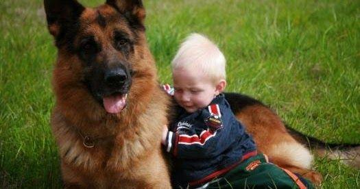 GERMAN SHEPHERD DOG GREEK FANS: ΤΙ ΠΡΕΠΕΙ ΝΑ ΣΚΕΦΤΩ ΠΡΙΝ ΑΠΟΦΑΣΙΣΩ ΝΑ ΣΥΜΒΙΩΣΩ ΜΕ ΕΝΑ ΓΕΡΜΑΝΙΚΟ ΠΟΙΜΕΝΙΚΟ